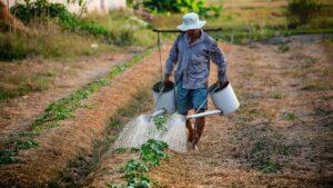 Atención a jornaleros agrícolas: Cómo funciona el programa y cómo participar